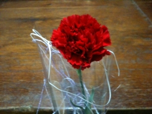 Carnation follower for all mothers